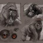07 - gorilla__andrebdois_andre bdois