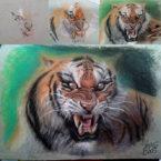29 - Tiger Pastel Seco